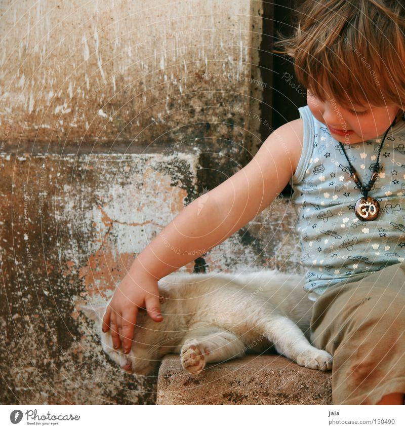 ich mag dich Katze Mensch Kind Ferien & Urlaub & Reisen Sommer Tier Liebe Junge Zusammensein Freundschaft maskulin Warmherzigkeit Vertrauen Kleinkind Sympathie