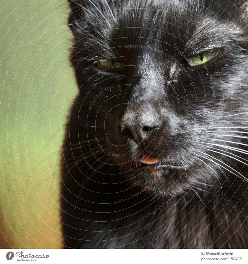 Lieschen grün schwarz Kopf Katze Fell Säugetier Zunge Tier Schnurrhaar Bäh