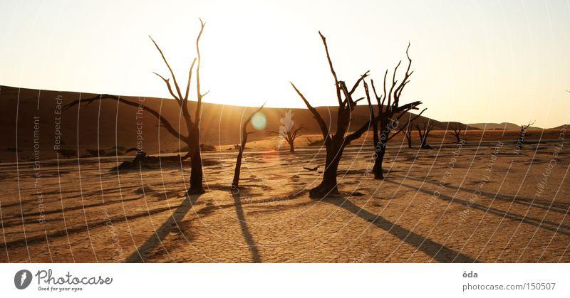 Dead Vlei Wüste Baum Tod Sensenmann trocken Schatten Geäst Namibia Sossusvlei Einsamkeit Landschaftsformen Afrika Riss