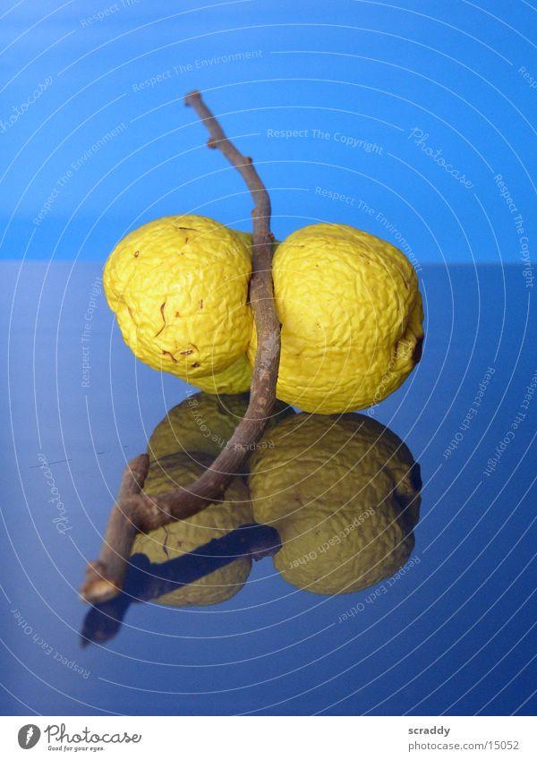 Quitten blau gelb Frucht Ast obskur verschrumpelt