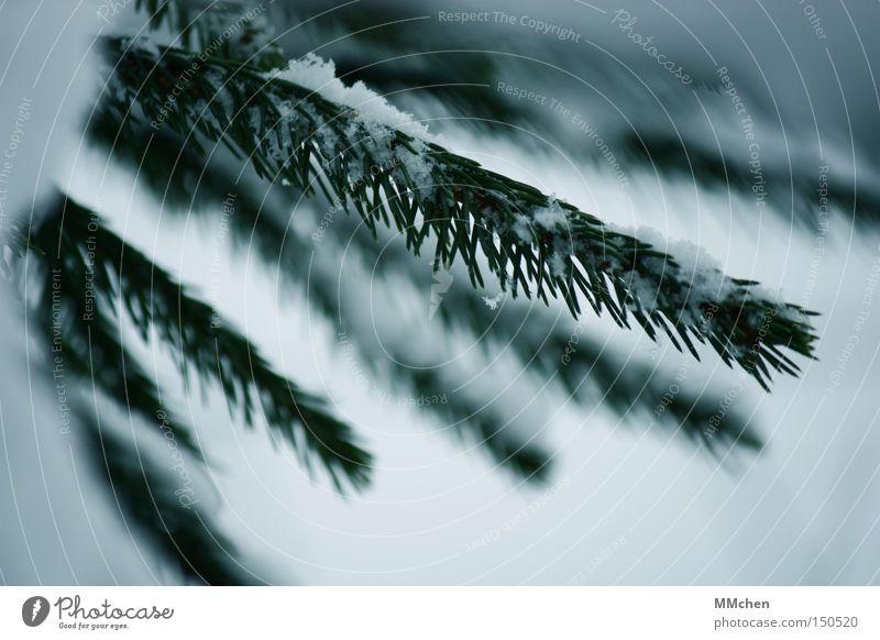 Oh Tannenbaum grün weiß Winter kalt Schnee Frost Weihnachtsbaum Zweig