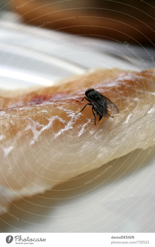 Herr Ober eine Fliege Ernährung Tier Fisch Gastronomie Teller Geruch Fleisch Übelriechend