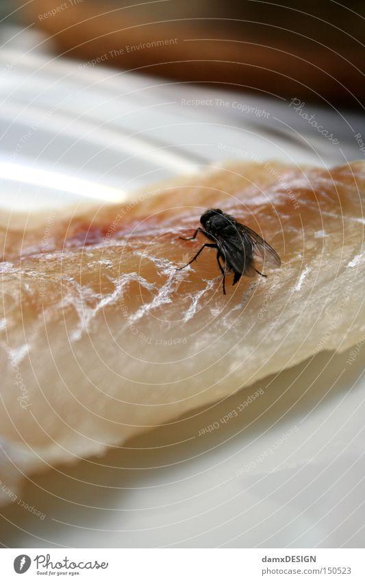 Herr Ober eine Fliege Geruch Teller Tier Fleisch Gastronomie Gammelfleisch Ernährung Fisch Übelriechend