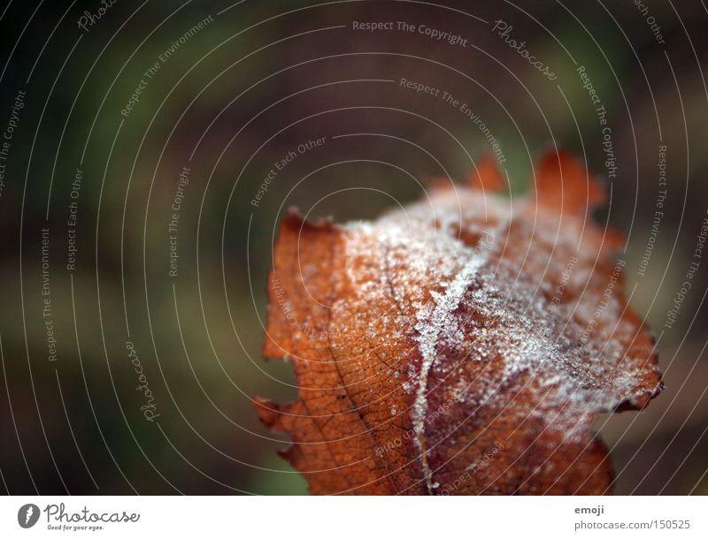 frostiges Blatt Natur Pflanze kalt Seil Frost gefroren