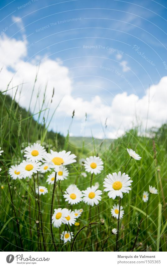 Idyll Himmel Ferien & Urlaub & Reisen Pflanze blau grün schön Blume Erholung Landschaft Wolken ruhig Berge u. Gebirge Frühling Wiese Gras natürlich