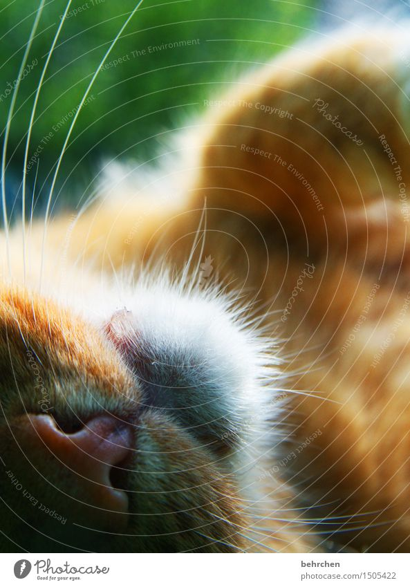 sabberheini Natur Tier Frühling Sommer Schönes Wetter Garten Park Wiese Haustier Katze Fell Nase Maul Schnurrhaar 1 genießen träumen schön Streicheln kuschlig