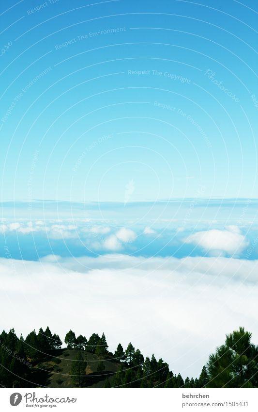 blau machen...am besten über den wolken! Himmel Ferien & Urlaub & Reisen schön Baum Wolken Ferne Wald Berge u. Gebirge außergewöhnlich Freiheit Tourismus