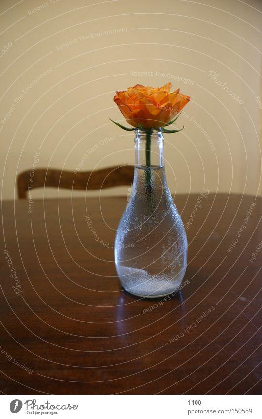 Vasenblümchen Blume Blumenvase Blüte Dekoration & Verzierung Flasche Grünpflanze Pflanze Schatten Stengel Stuhl Tisch Tischplatte Haushalt Licht