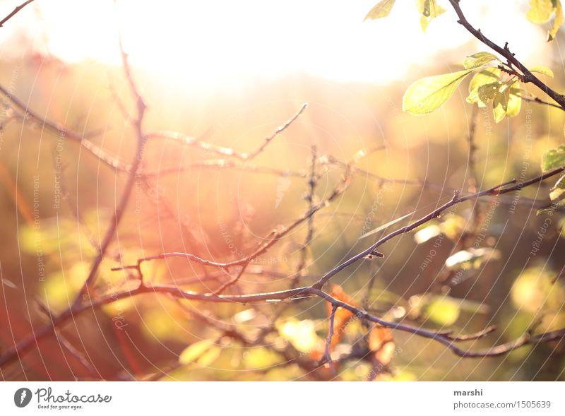 Sonne tanken Umwelt Natur Pflanze Sonnenlicht Sommer Herbst Sträucher Stimmung Ast herbstlich Wärme Warmes Licht Farbfoto Außenaufnahme Dämmerung Sonnenaufgang