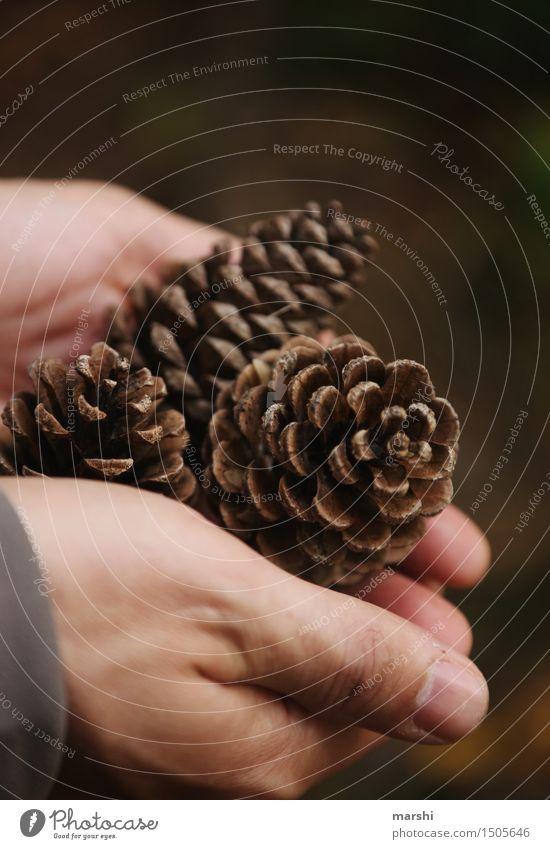 Hände voll Natur Pflanze Hand Wald Herbst braun Stimmung Sammlung Zapfen Tannenzapfen