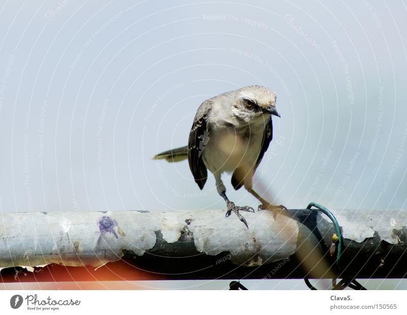 Schräger Vogel Himmel Einsamkeit Tier Vogel Wut Ärger Stab Vorgesetzter Misstrauen Schräger Vogel