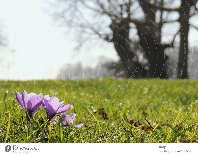 Frühlingswiese Himmel Natur Pflanze blau grün schön Baum Blume Landschaft Umwelt Leben Blüte Gras natürlich klein
