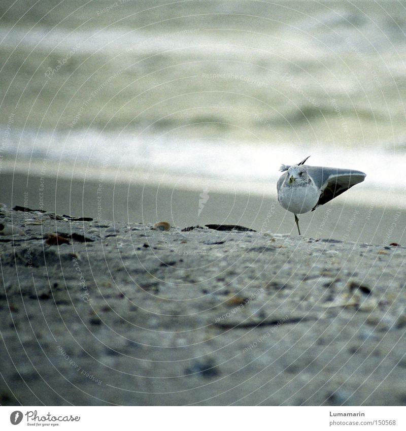 Strandgymnastik Wasser Meer Strand ruhig Erholung Sand Küste Vogel Zufriedenheit Konzentration Möwe Turnen Umwelt