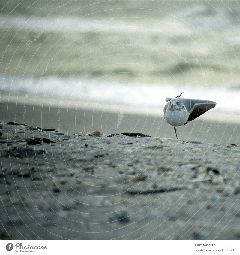 Strandgymnastik Wasser Meer ruhig Erholung Sand Küste Vogel Zufriedenheit Konzentration Möwe Turnen Umwelt
