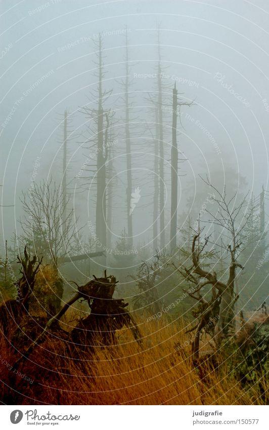 Dämmerung senkte sich von oben Wald Brocken Harz Nebel Dunst Baum Baumsterben Waldsterben Natur Umwelt Herbst Winter kalt mystisch November Farbe