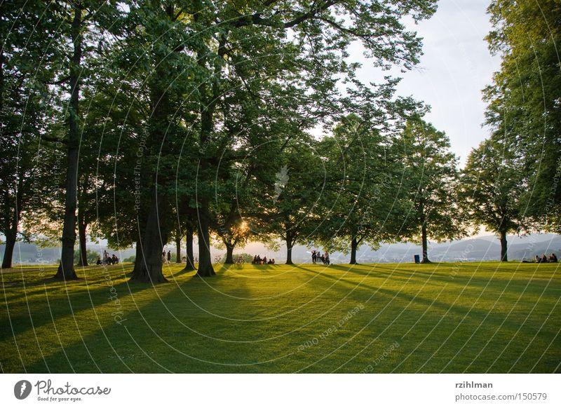 Chillout auf dem Heitere Platz in Zofingen Mensch Baum Sonne grün Erholung Rasen Abenddämmerung Abendsonne