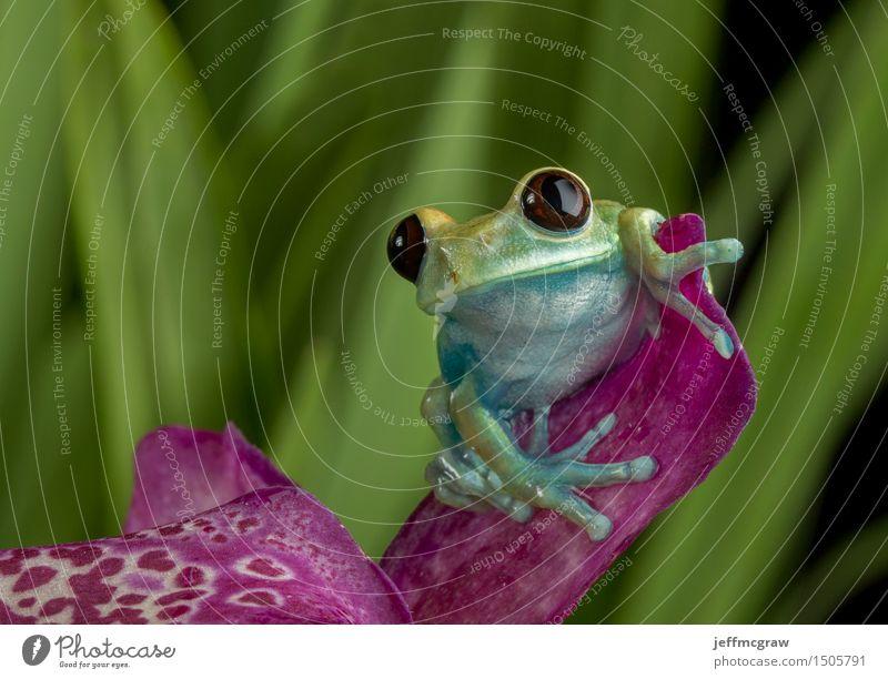 Natur Pflanze grün Tier Gesicht Umwelt Blüte hell Wildtier sitzen Finger Haustier Frosch Orchidee