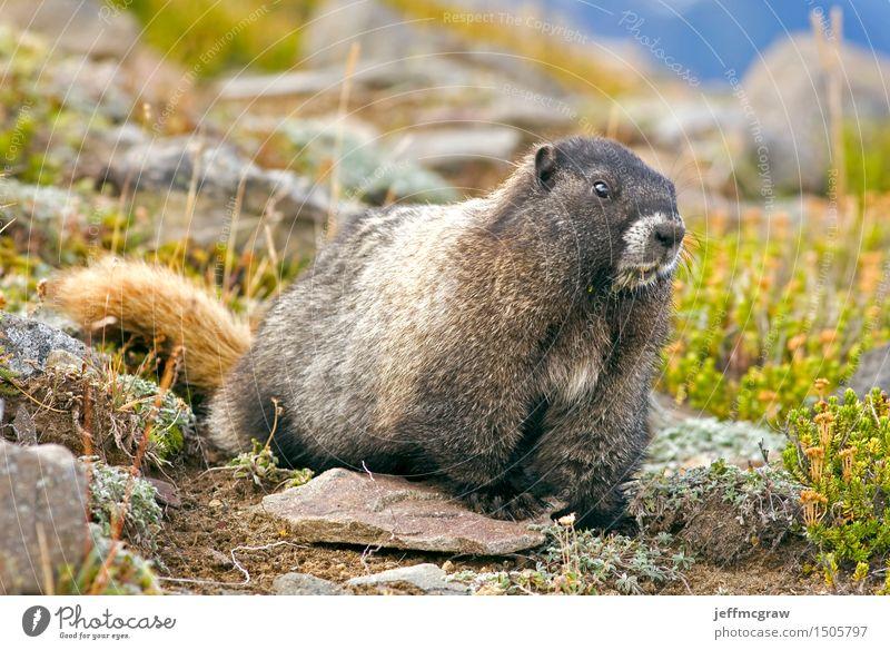 Natur Pflanze Landschaft Tier Berge u. Gebirge Umwelt Wiese Gras Wildtier Sträucher krabbeln
