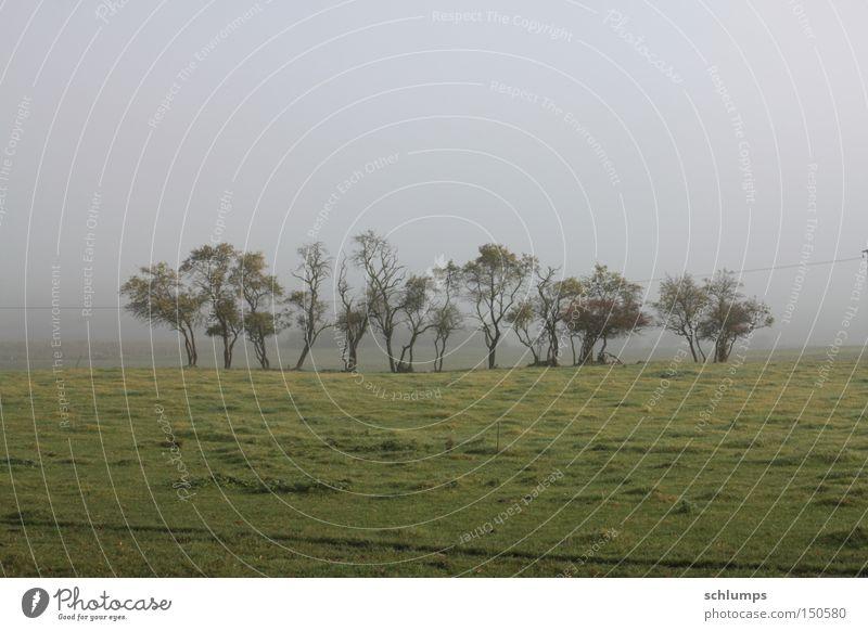 grueppchen Baum grün Herbst Wiese Landschaft Nebel Sträucher Mecklenburg-Vorpommern
