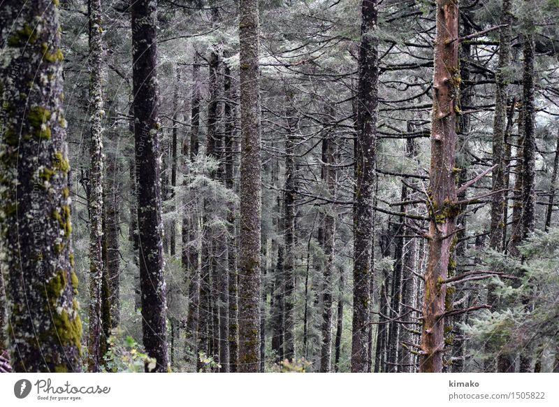 Vorbildlicher Wald Natur Ferien & Urlaub & Reisen Pflanze schön Baum Erholung Einsamkeit Freude Winter Berge u. Gebirge Umwelt Gras Gesundheit Tourismus Luft