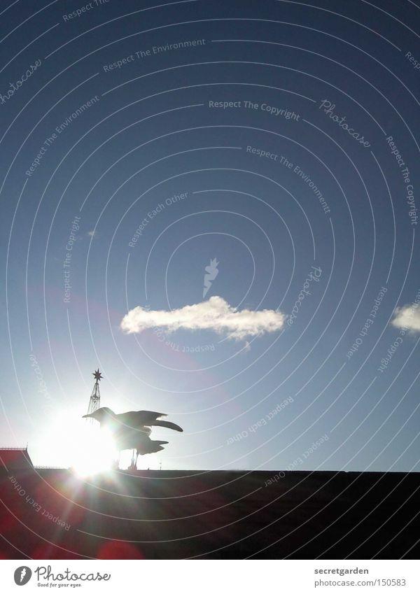 mafield Himmel blau Sonne Wolken Winter schwarz kalt Mauer Religion & Glaube Vogel unten Möwe flattern