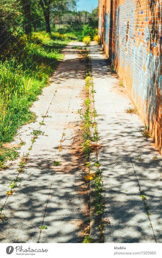 Unkraut, das durch Sprung im Pflaster wächst Kräuter & Gewürze Leben Erfolg Natur Pflanze Dürre Gras Blatt Straße Beton alt Wachstum natürlich stark grau grün