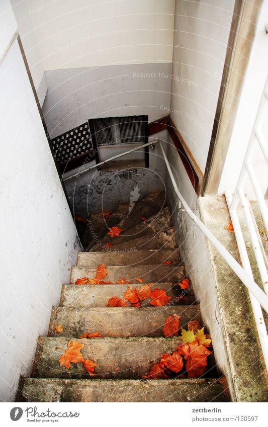 Kellereingang Treppe verborgen Versteck Vorrat Lager Haus Häusliches Leben Geländer Treppengeländer Herbst abwärts Abstieg Fenster Detailaufnahme kellertreppe