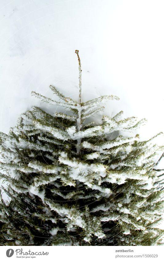 Weihnachtsbaum/slight return Natur Weihnachten & Advent Baum Winter kalt Anti-Weihnachten Schnee Nadelbaum Schneedecke Tauwetter Neuschnee
