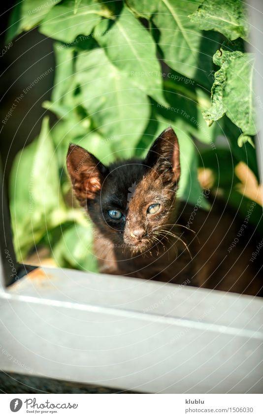 kleine Katze Straße Behaarung beobachten niedlich wild weich graues Kätzchen nicht nehmen Problem soziales Problem Reinrassig mit Bedacht Straßenkatze Licht