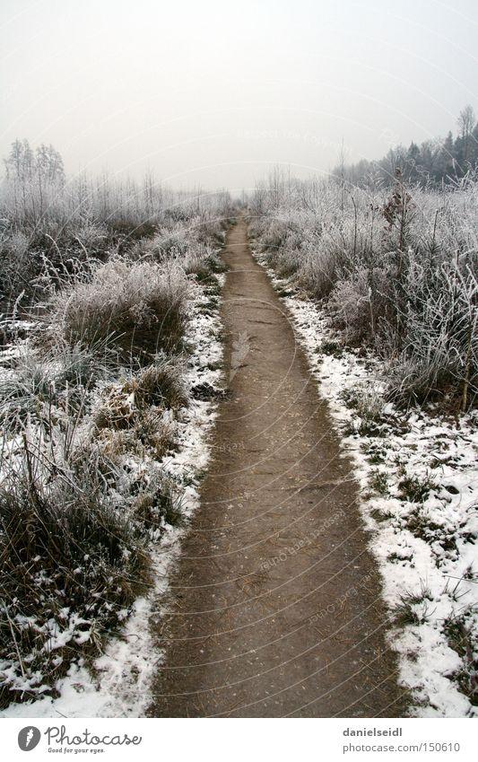 Frost im Januar kalt Einsamkeit Wege & Pfade Ziel Schnee Trauer trist Winter Traurigkeit