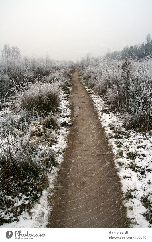 Frost im Januar Winter Einsamkeit kalt Schnee Traurigkeit Wege & Pfade Trauer trist Frost Ziel