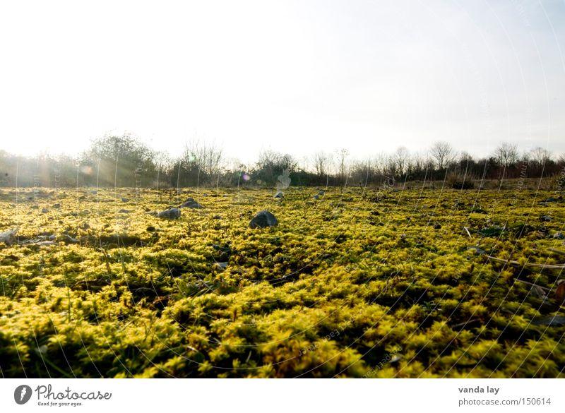 Morning Glory Natur schön Baum Herbst Berge u. Gebirge Stein Landschaft gold Horizont Sträucher Boden Bodenbelag Moos bedecken Mineralien
