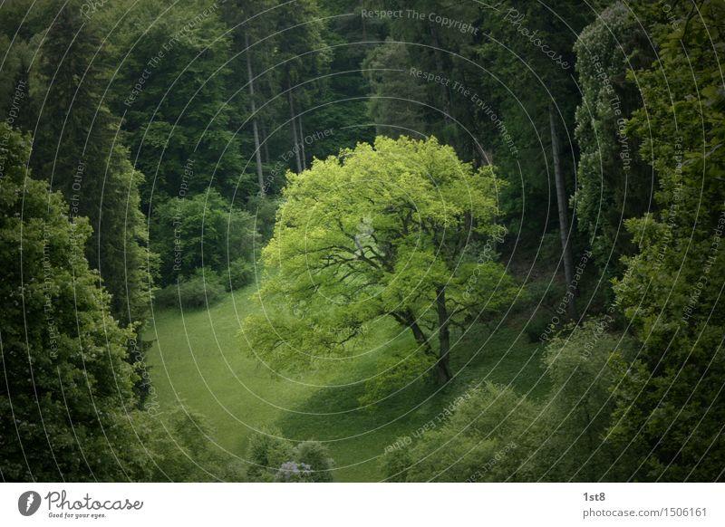 deep in the woods... Natur alt Pflanze grün schön Baum Landschaft Blatt Wald Umwelt Wiese Holz Denken Park Wachstum Erde
