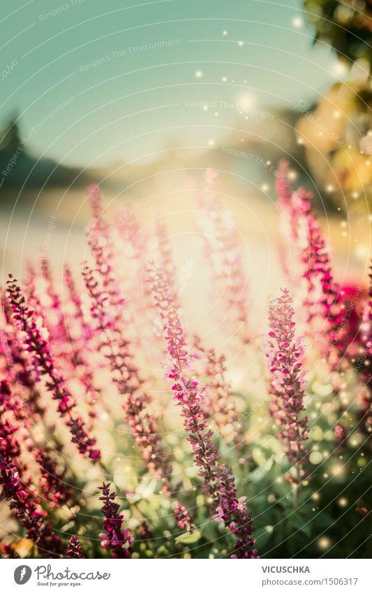 Sommer Garten mit Salbei Blumen Lifestyle Natur Pflanze Sonnenaufgang Sonnenuntergang Sonnenlicht Herbst Schönes Wetter Blatt Blüte Park Blühend Design Duft