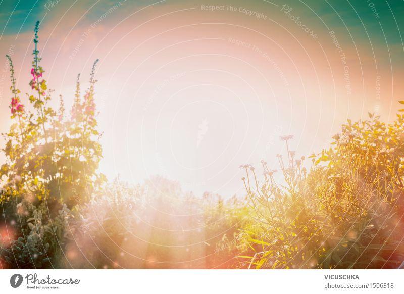 Herbst Garten Design Sommer Natur Pflanze Schönes Wetter Blume Gras Sträucher Blüte Park gelb Sonnenuntergang Sonnenstrahlen Farbfoto Außenaufnahme