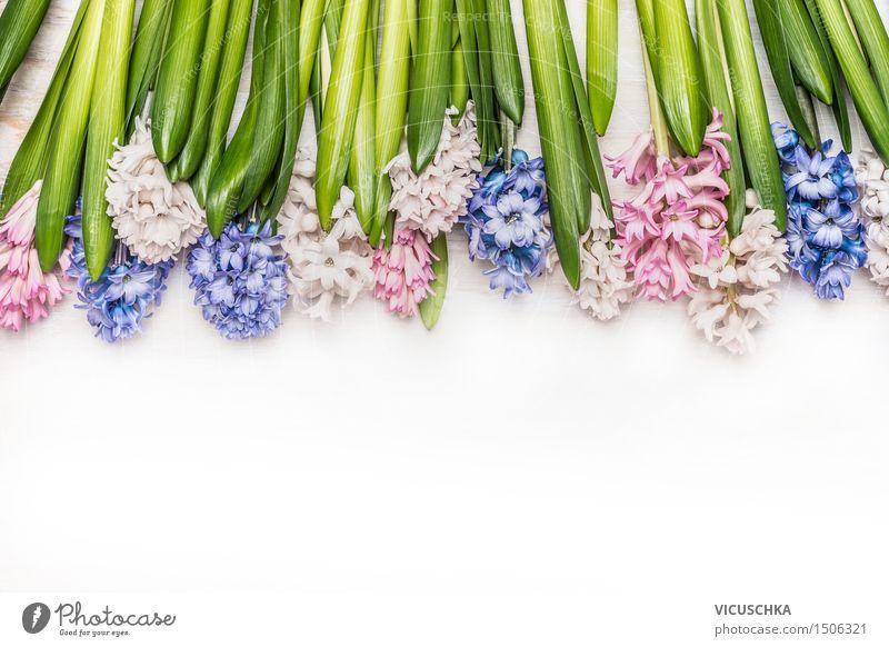 Frühlingsblumen Hintergrund mit Hyazinthen auf weißem Holz Stil Design Sommer Garten Dekoration & Verzierung Feste & Feiern Natur Pflanze Blume Blatt Blüte
