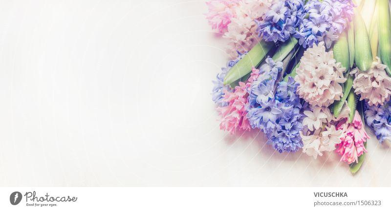 Bunter Hyazinthen Blumenstrauß Natur Pflanze blau Sommer weiß Blatt Liebe Blüte Frühling Hintergrundbild Stil Garten Feste & Feiern Stimmung rosa