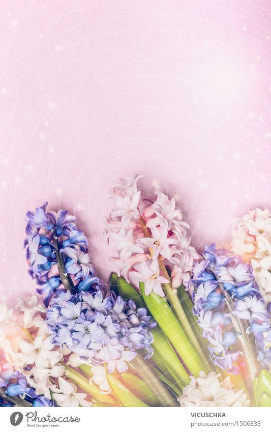 Bunte Hyazinthen auf hellrosa Hintergrund Natur Pflanze Sommer Blume Freude Leben Liebe Gefühle Frühling Stil Hintergrundbild Glück Garten Feste & Feiern Party