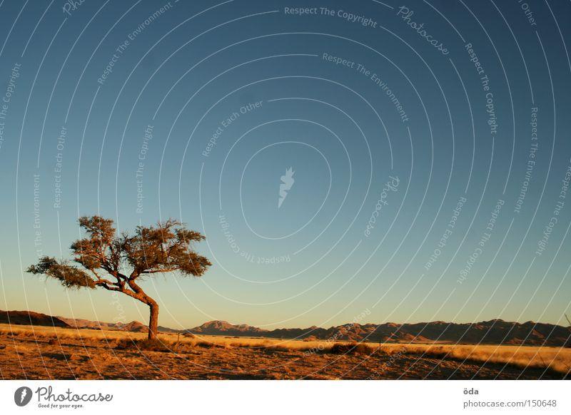 Schau, ein Baum! Himmel Ferne Landschaft Afrika Namibia Aussicht Stimmung Abend Einsamkeit