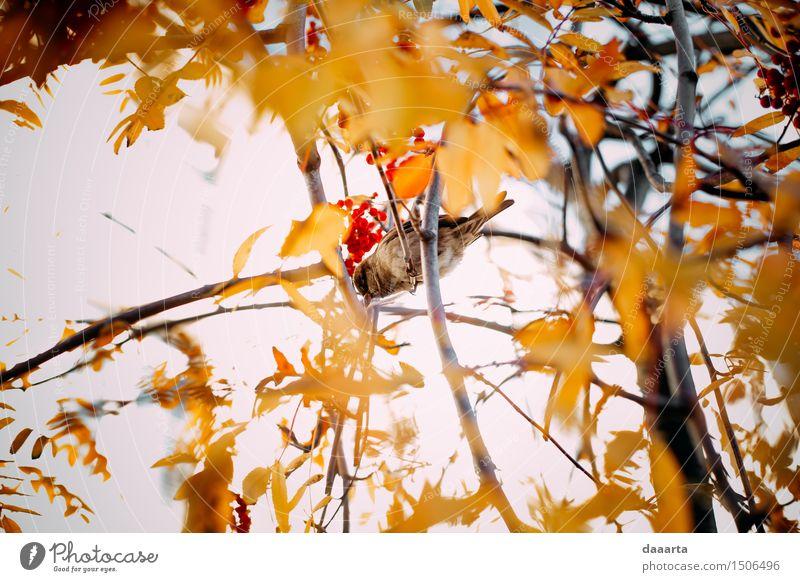 Spatz Stil Design Freude Leben harmonisch Freizeit & Hobby Spielen Ausflug Abenteuer Freiheit Sightseeing Garten Natur Pflanze Tier Herbst Schönes Wetter Baum