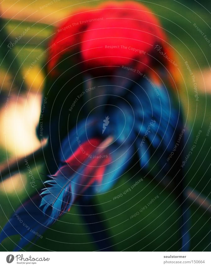 Mamagei grün rot Tier Garten Park Vogel Feder Flügel Zoo exotisch durcheinander Papageienvogel Cross Processing Vogelpark Walsrode