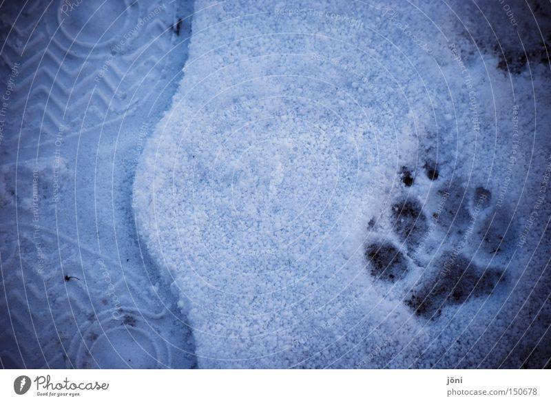 Draußen zu Hause Mensch Winter Tier Schnee Freiheit Hund Fuß Zusammensein Abenteuer Spuren Fußspur Säugetier Gegenteil Wolf Wildnis