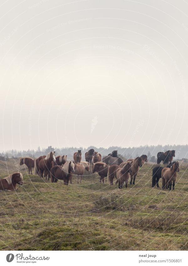 Pferde, Herde, Erde Landschaft Wolken schlechtes Wetter Nebel Weide Tier Nutztier Blick schlafen braun Kraft Vertrauen ruhig Freundschaft ruhen aufwachen