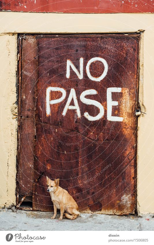 NO PASE Kuba Südamerika Mittelamerika Karibik Tür Tier Haustier Hund Haushund 1 Vorhängeschloss Rost Metall Schriftzeichen Hinweisschild Warnschild