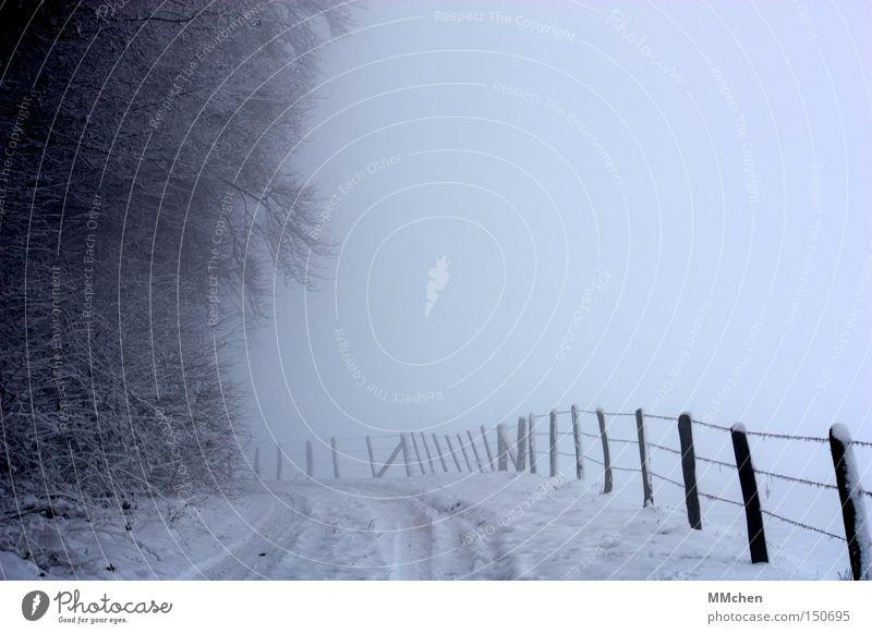 Stille Winter ruhig Wald Schnee Wege & Pfade Nebel Romantik Spaziergang Spuren Unendlichkeit Zaun ungewiss Eifel Waldrand