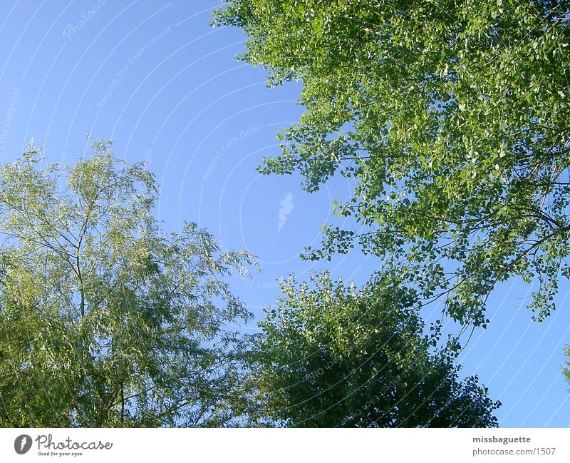 Bäume Himmel Baum Sonne grün blau Sommer hell