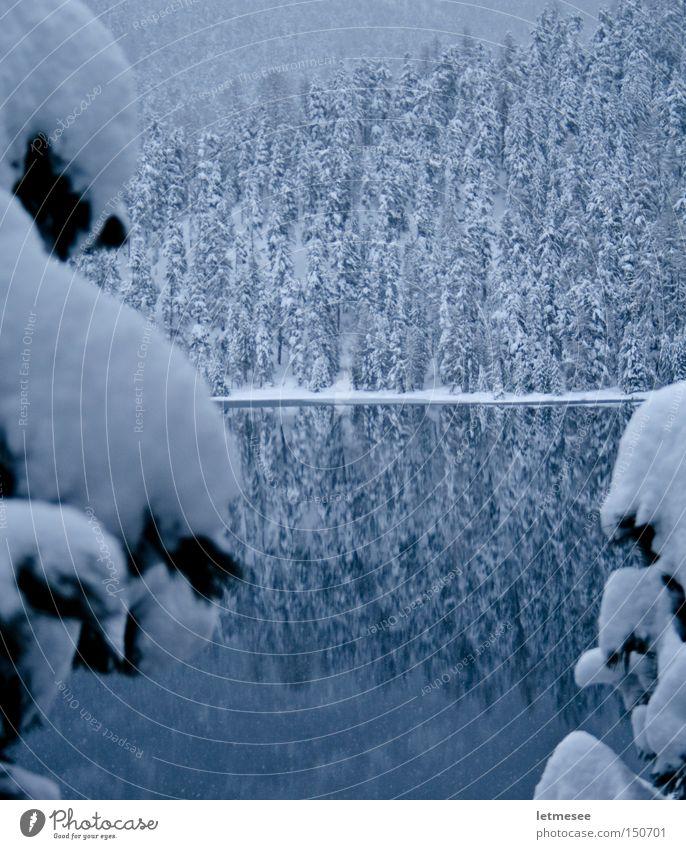 Silser See Schnee Wald Baum Schweiz Silsersee Engadin Reflexion & Spiegelung