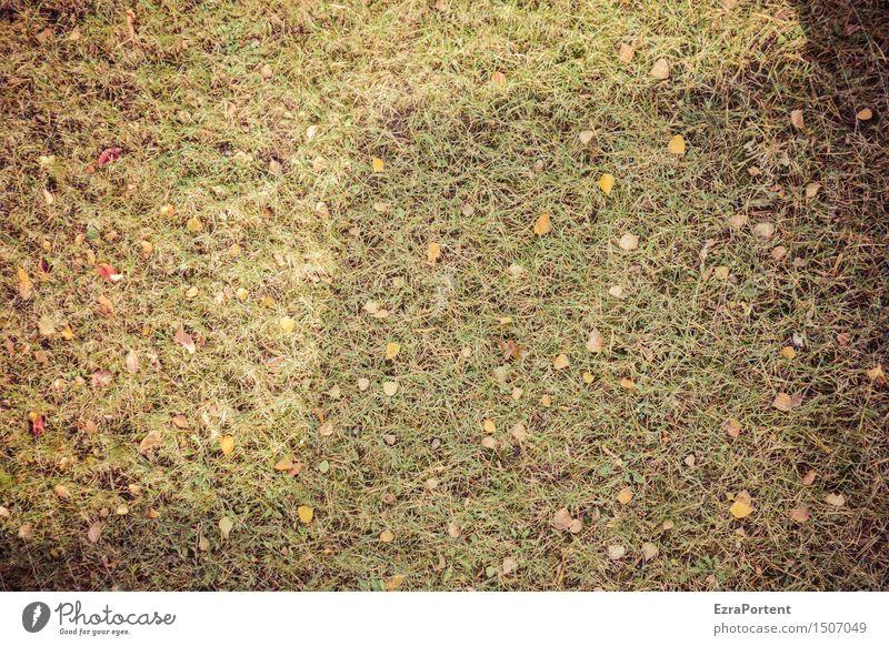 historisch|Rasen vom Vorjahr (inklusive zackiger Beschattung) Umwelt Natur Erde Sonne Gras Garten Park Wiese Linie natürlich grün Blatt Schatten Schattenseite