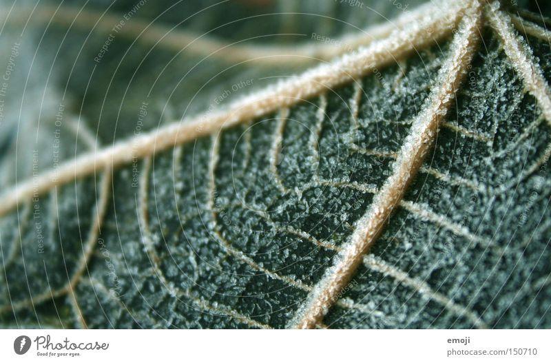Adern Natur grün Pflanze Blatt kalt Seil Frost gefroren Gefäße