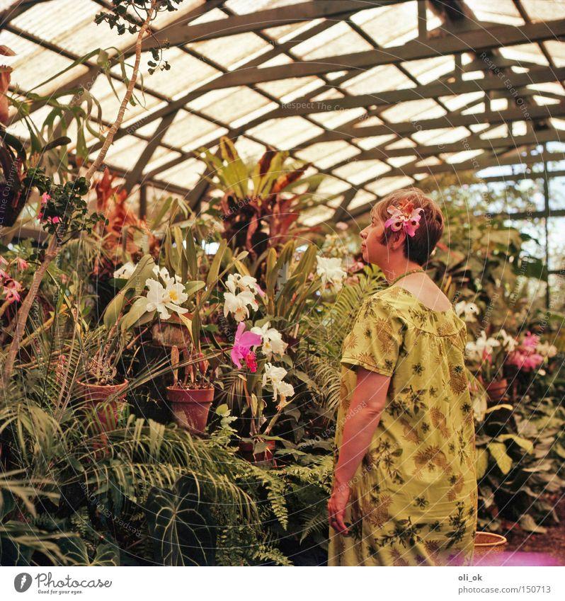 Flower Power Garten Frau Erwachsene Blume Orchidee Park Romantik Siebziger Jahre Gewächshaus Gärtnerei verträumt Hippie kultig Fünfziger Jahre Farbfoto